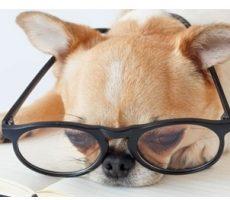 hondenbloggers