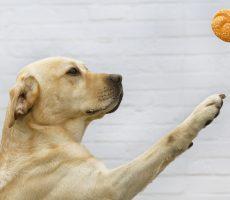 pet-snacks-MySeasons