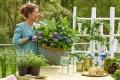 Balkonieren met hortensia's