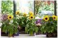 Sunsation: zonnetje in huis en tuin