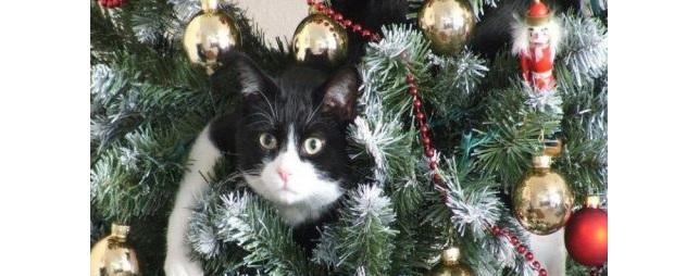 Robotkat onder de Kerstboom