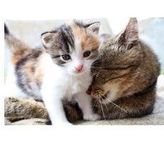 katenveertjes