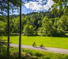 fietsen zwarte woud