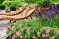 Nieuwe tuinplant: Bloombux